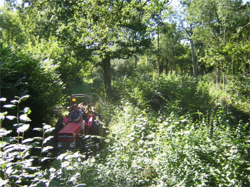 The Coppice Cycle